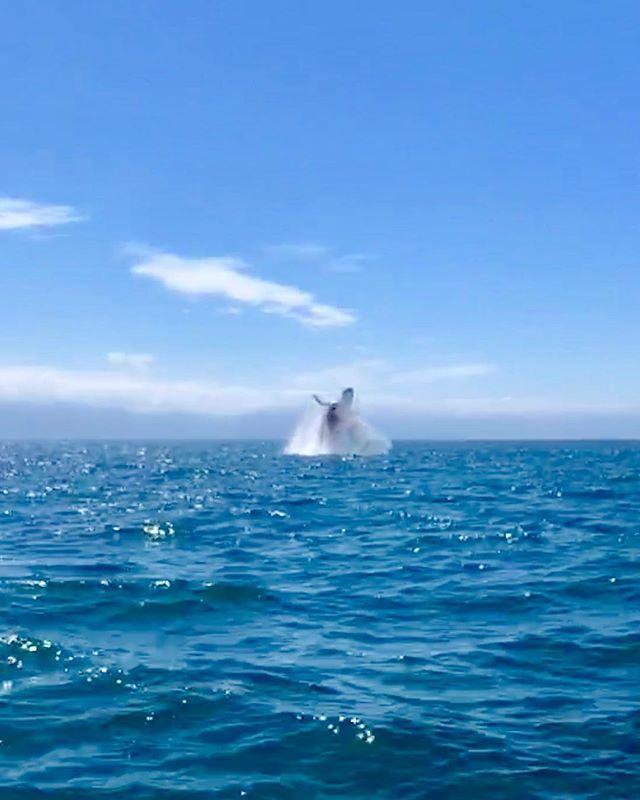 Whalin' hard