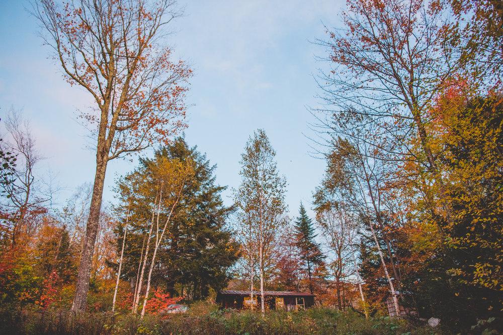 cabin-1151.jpg