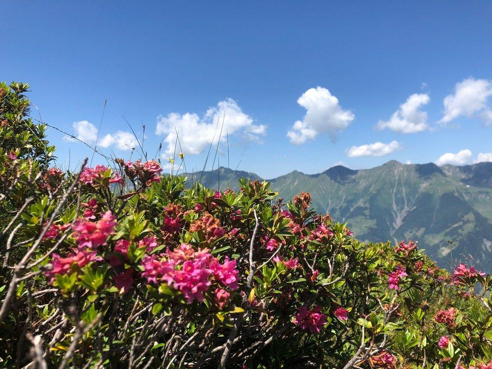 Potranno tagliare tutti i fiori, ma non fermeranno mai la primavera.   Pablo Neruda