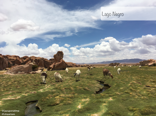 Bolivia  is known to home thousands of llamas, alpacas and vicigunas. This location is untouched land filled with wild and domestic llamas. Lago Negro is one if the new stops for tourist on the Salar de Uyuni tour of Oruro.