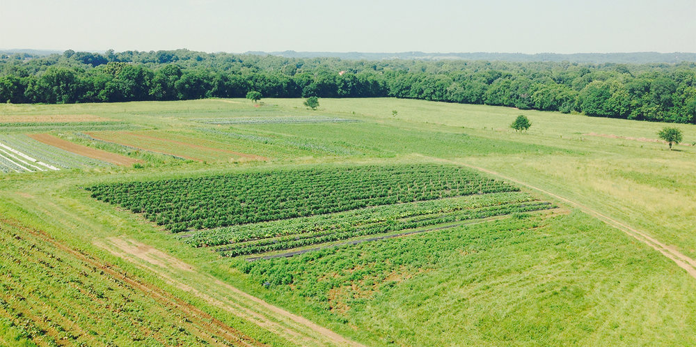 Organic-CSA-Farm-Spring-Hill-TN-_4500-2.jpeg