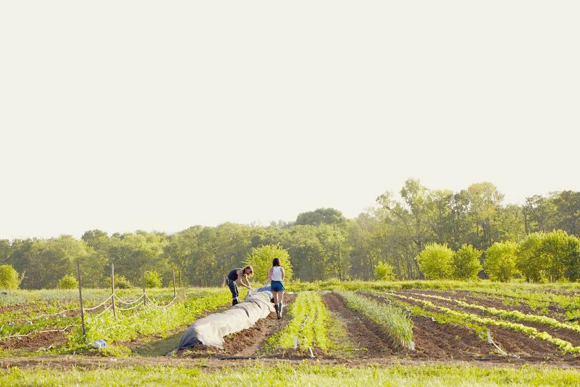 Organic-CSA-Farm-Spring-Hill-TN-_1641-1-2.jpeg