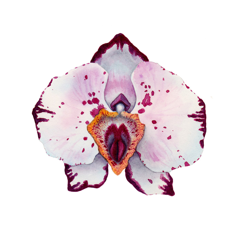 instagramorchidpussyflower.jpg