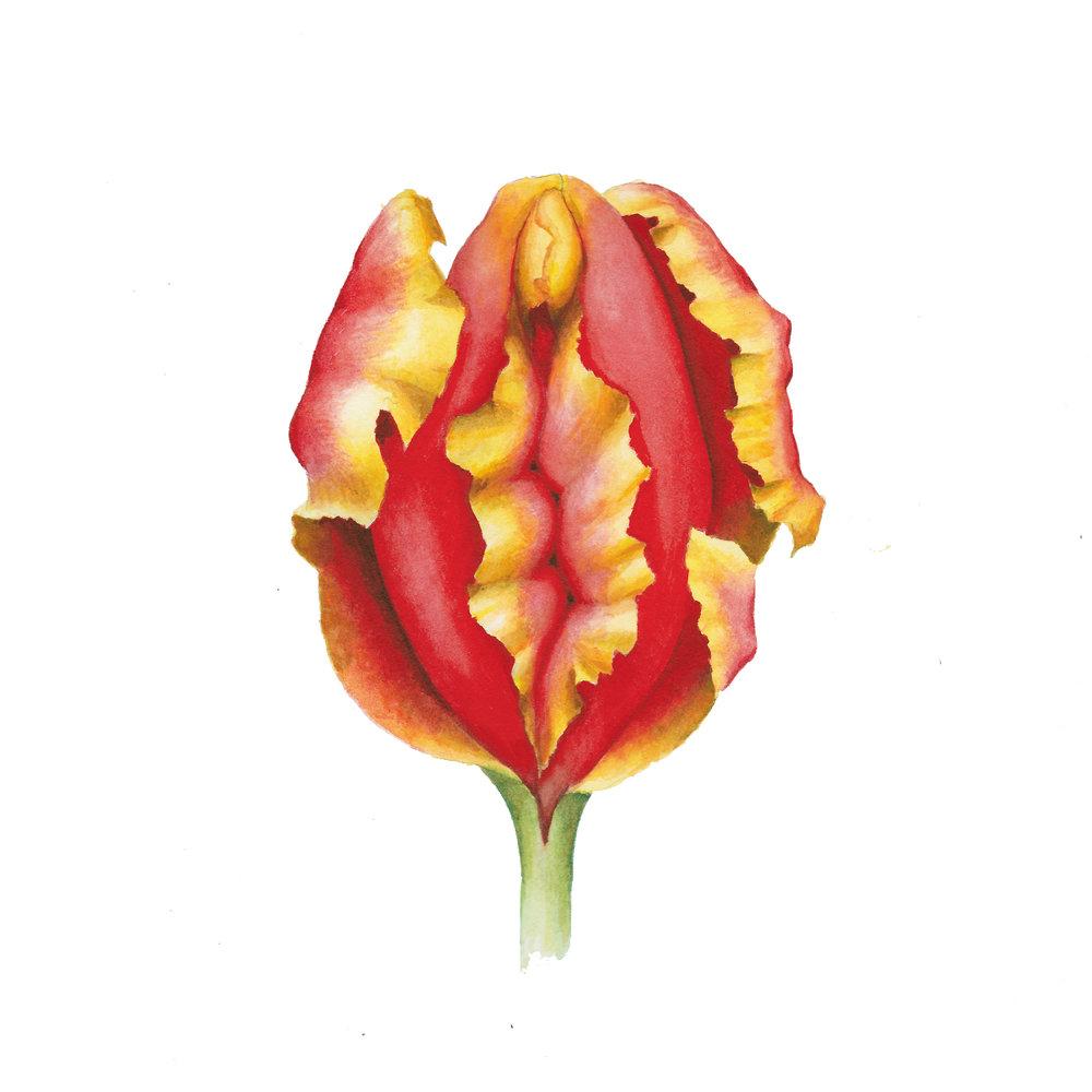tulipsinstagram.jpg