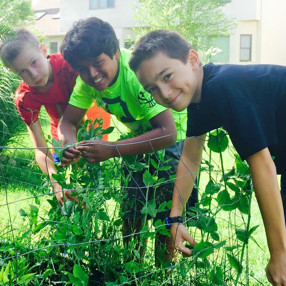 garden-thieves