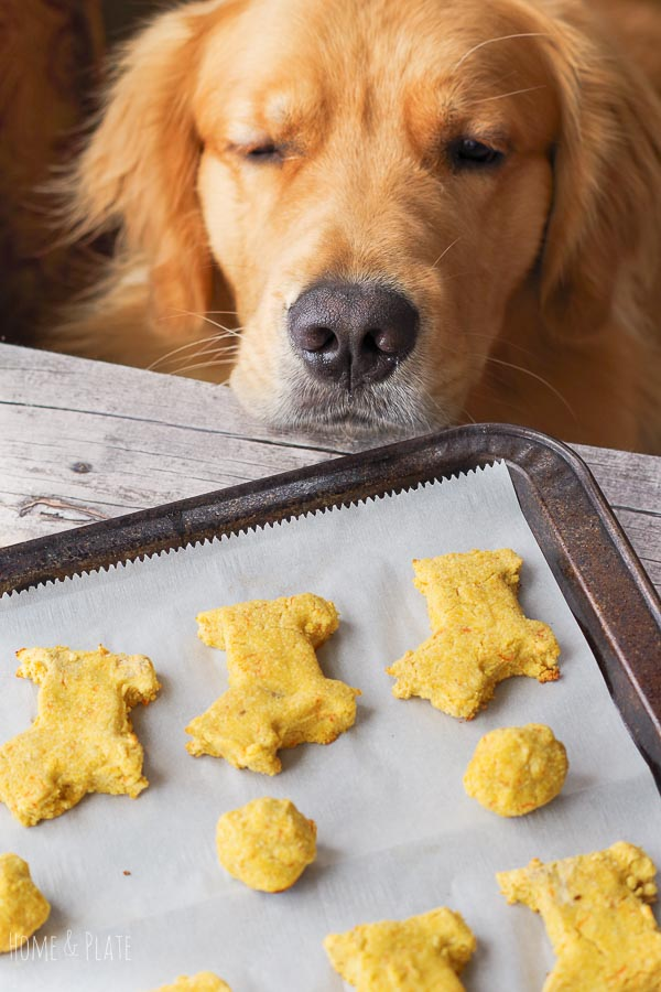 Grain Free Dog Treat Recipe For Dogs With Allergies Home Plate