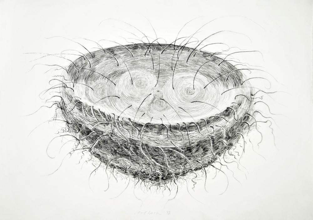 Line Drawing Nest : Best art drawing pen ink images