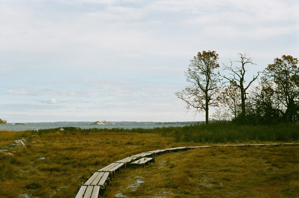 Hog Island.jpg