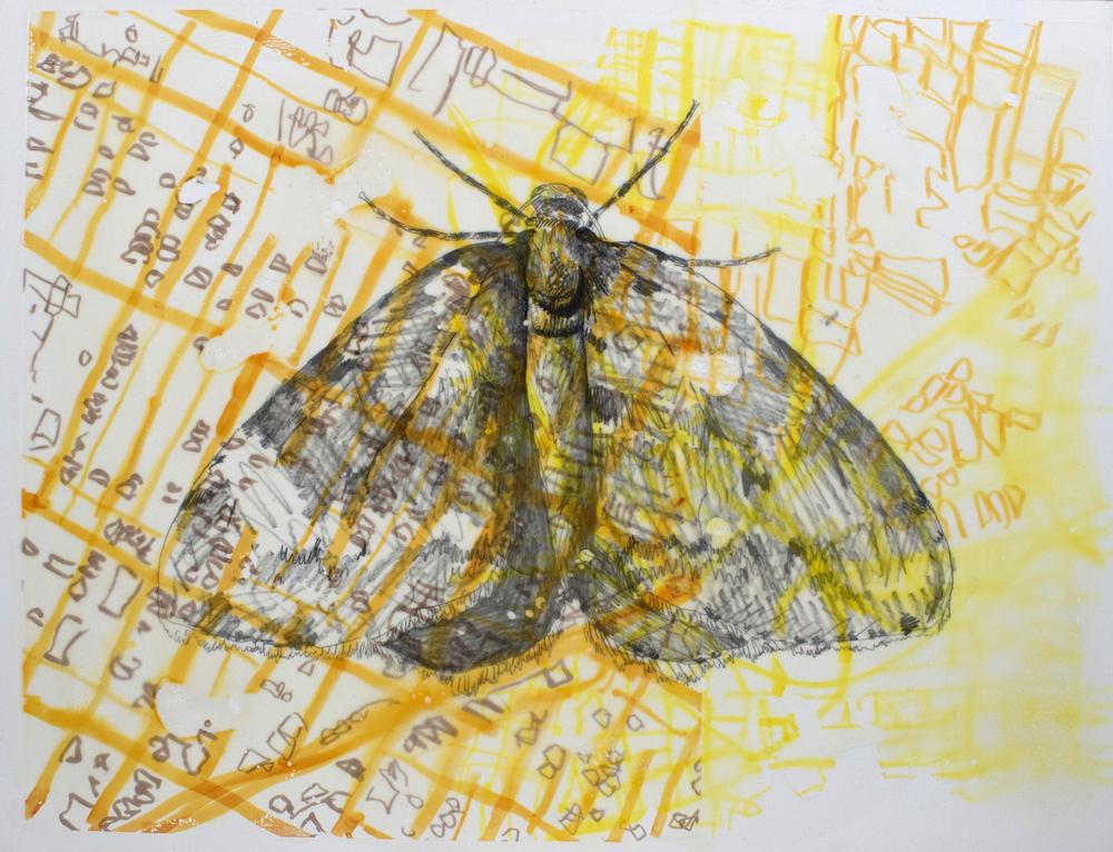 Moth drone