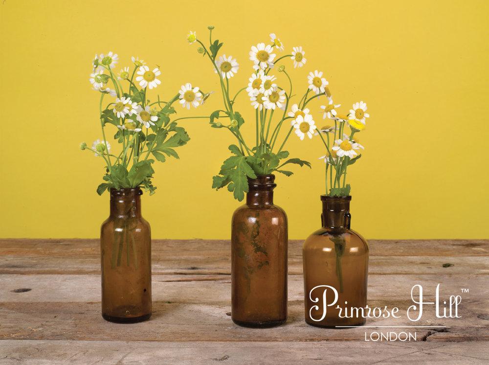 primrose small.png
