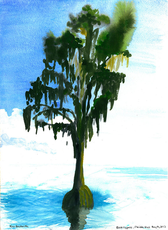 Bald Cypress, Gouache and Watercolor