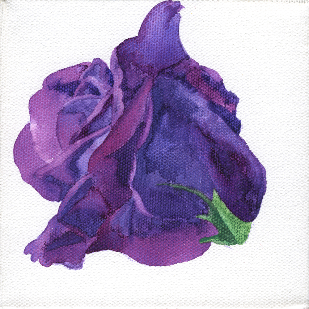 Violet Watercolor Rose on Canvas