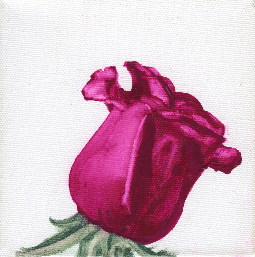 Magenta Watercolor Rose on Canvas