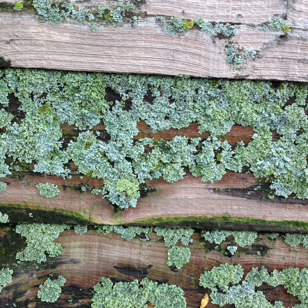 Deep Green Lichen, Saint Charles, IL