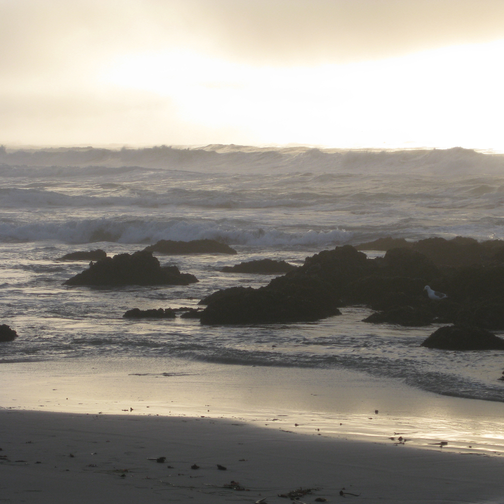 Pacific Ocean, Asilomar, California