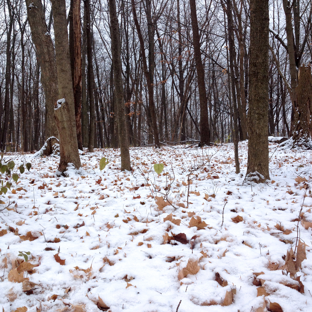 Snowy Wood, Shabbona, IL