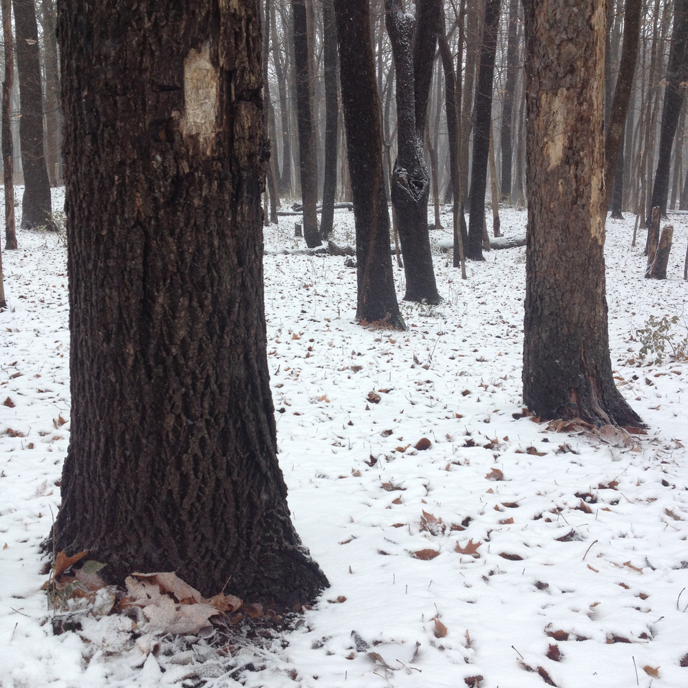 Winter Wood, Shabbona, IL