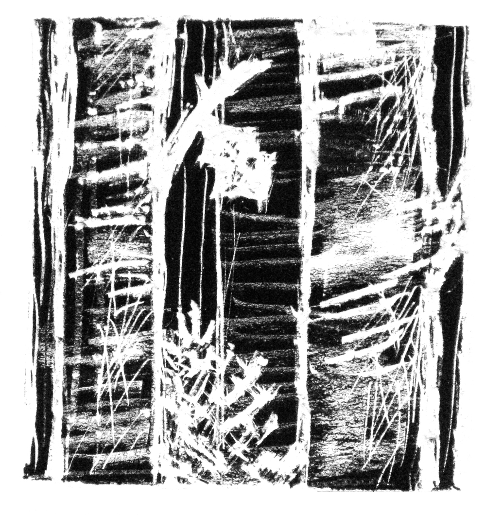 The Woods , Scratchboard etching