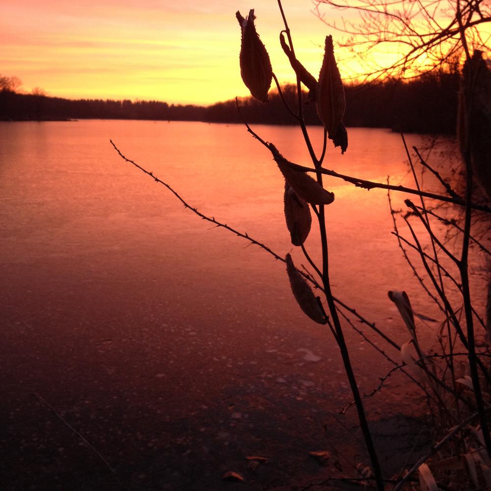 Milkweed and Red Sunset, Shabbona, IL
