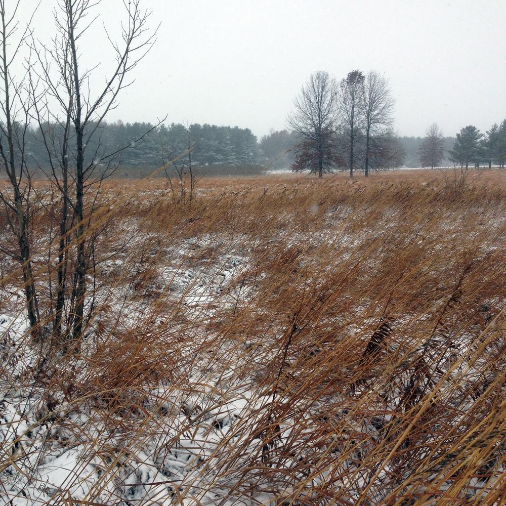 Winter Wind, Shabbona, IL