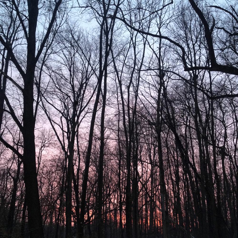 Twilight in the Bare Wood, Shabbona, IL