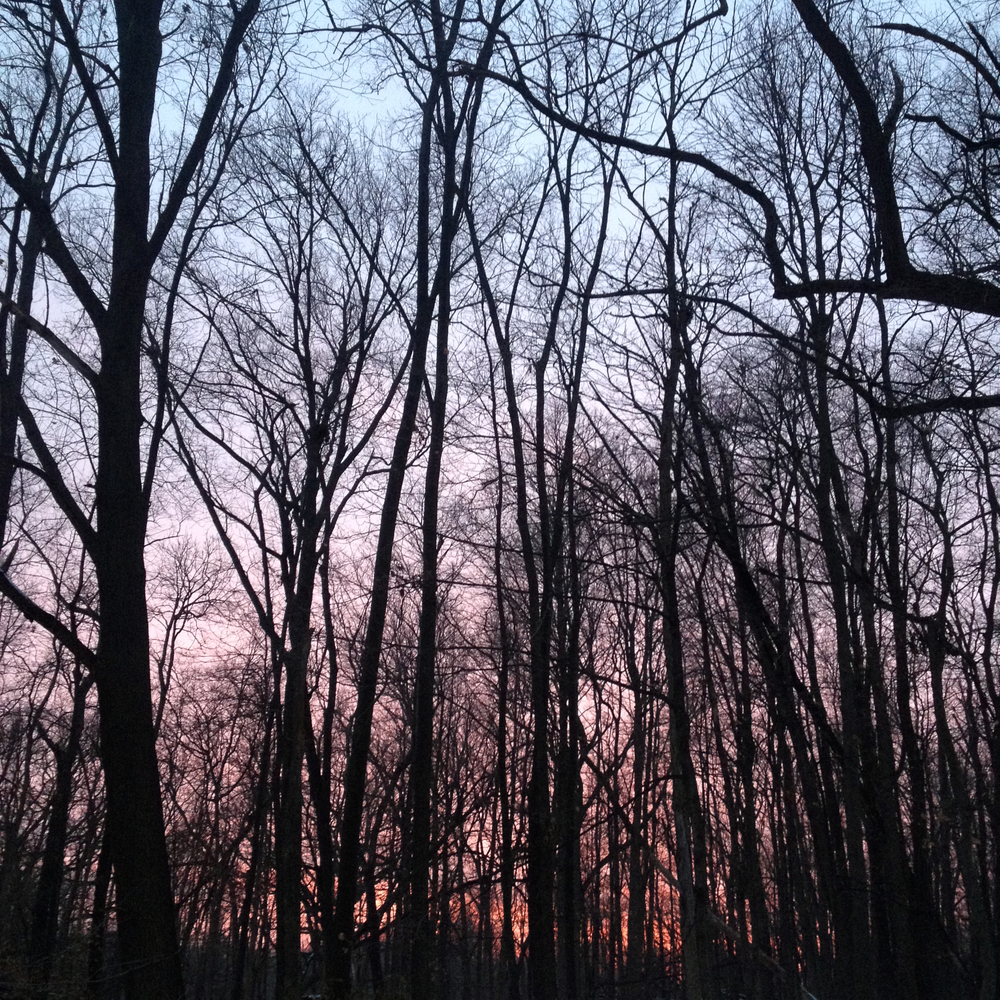 Twilight in Bare Wood, Shabbona, IL