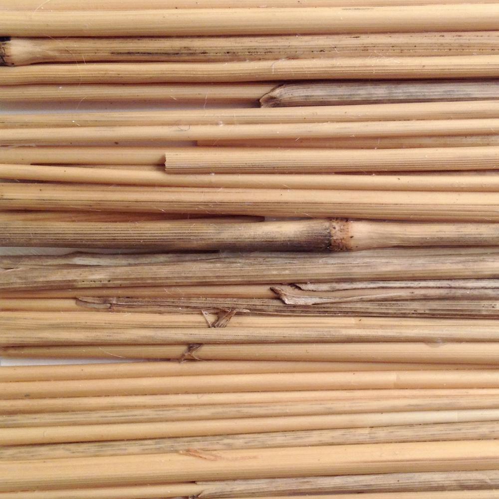 Botanical reeds swatch