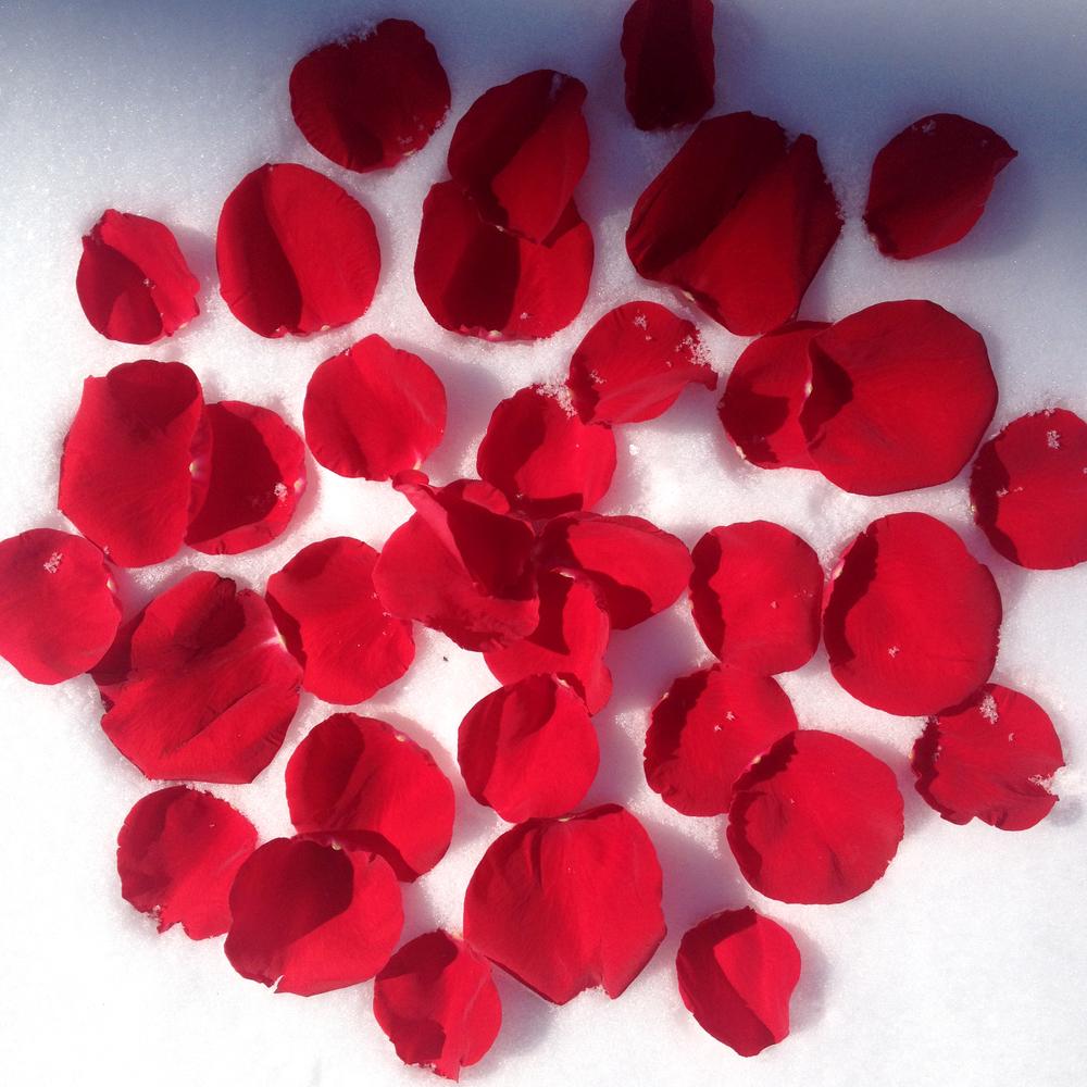 Rose Petals in Snow II, Floral carpet