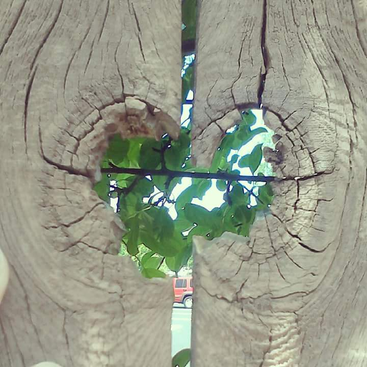Heart-shaped wood knot in a fence with leaf-covered tree bough.