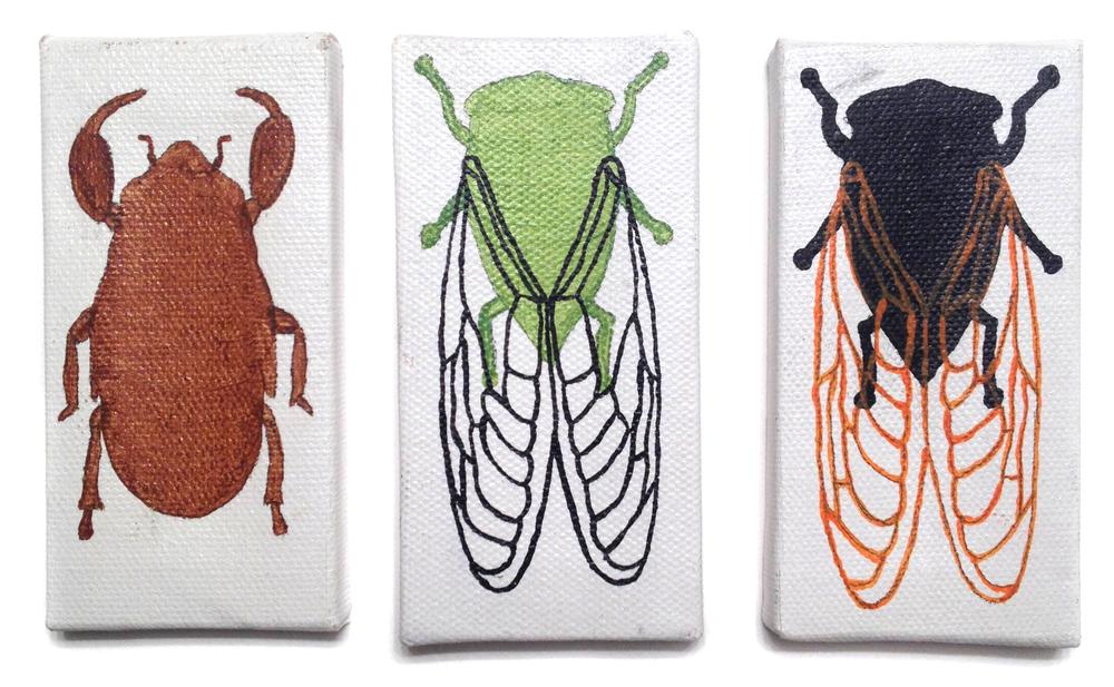 Cicada life-cycle, Daniel Beckwith