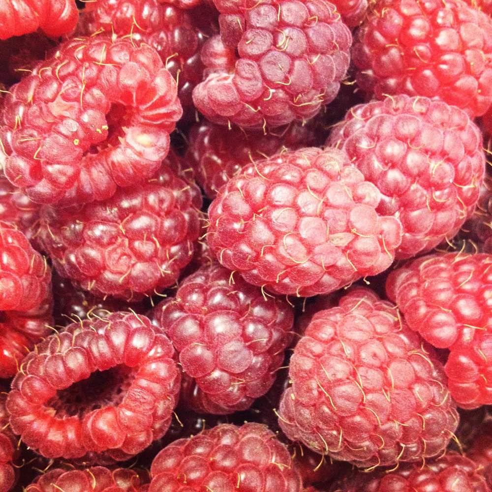 Raspberries, Geneva, IL