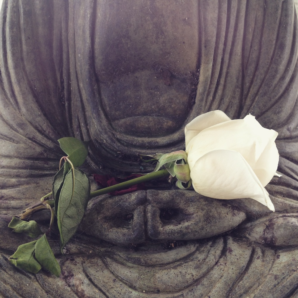 Rose for Siddhartha, Saint Charles, IL