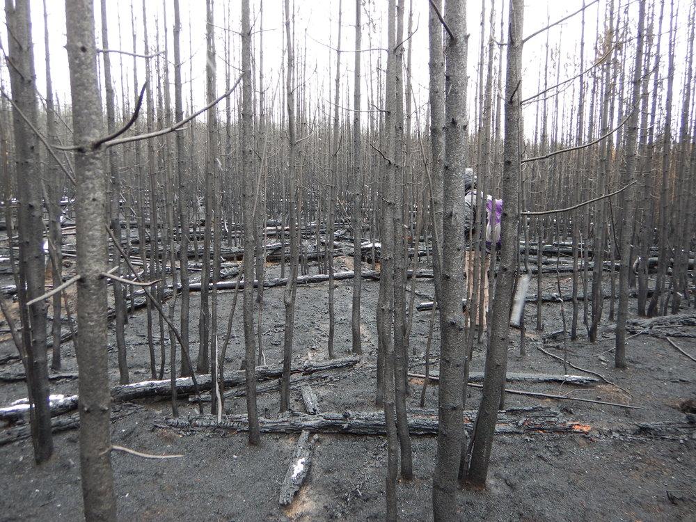 Yellowstone Fall 2016 005.JPG