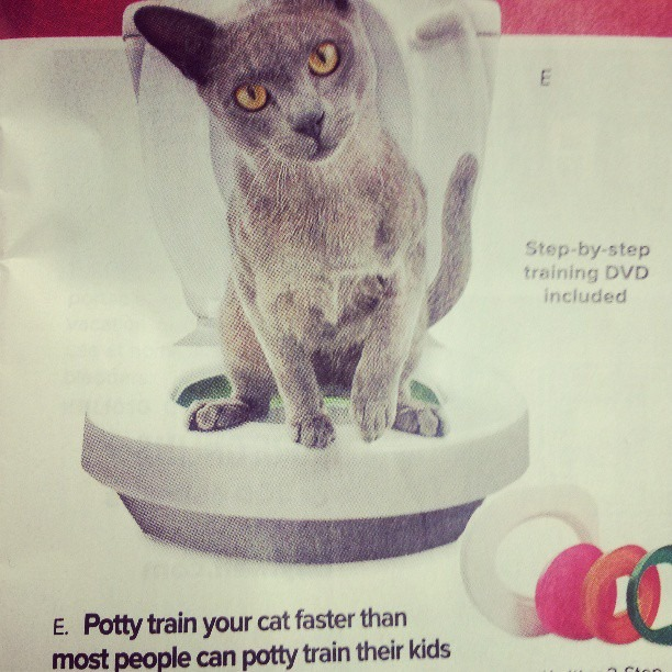 "#skymall is ridiculous some times. If cats could talk: ""Why the fuck am I on a toilet…?"""