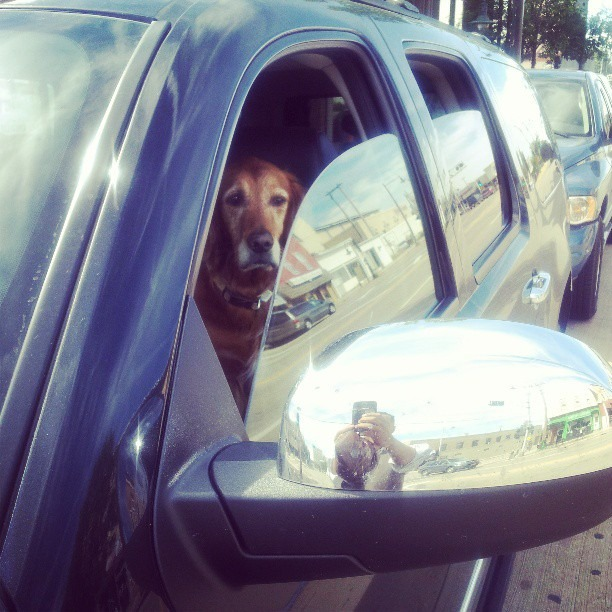 I don't know why this always cracks me up #dogs driving
