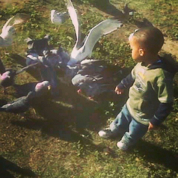 #ThrowbackThursday my nephew just turned 6 and is so tall. Right here though these birds were taller than him!