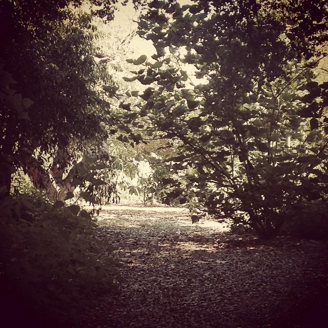 #arboretum