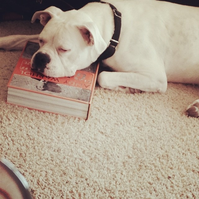 The homie has a new thing: sleeping on my books