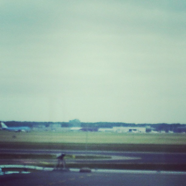 Sitting here watching planes land in Amsterdam and I'm wondering who the hell cuts all that grass!?