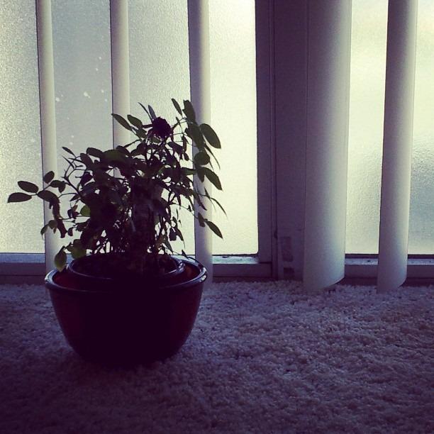 #home #plantlife