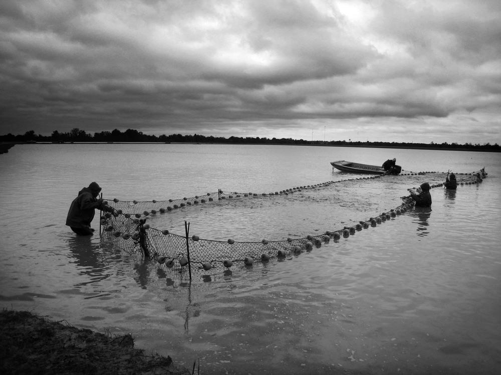 Crawfishing, Louisiana