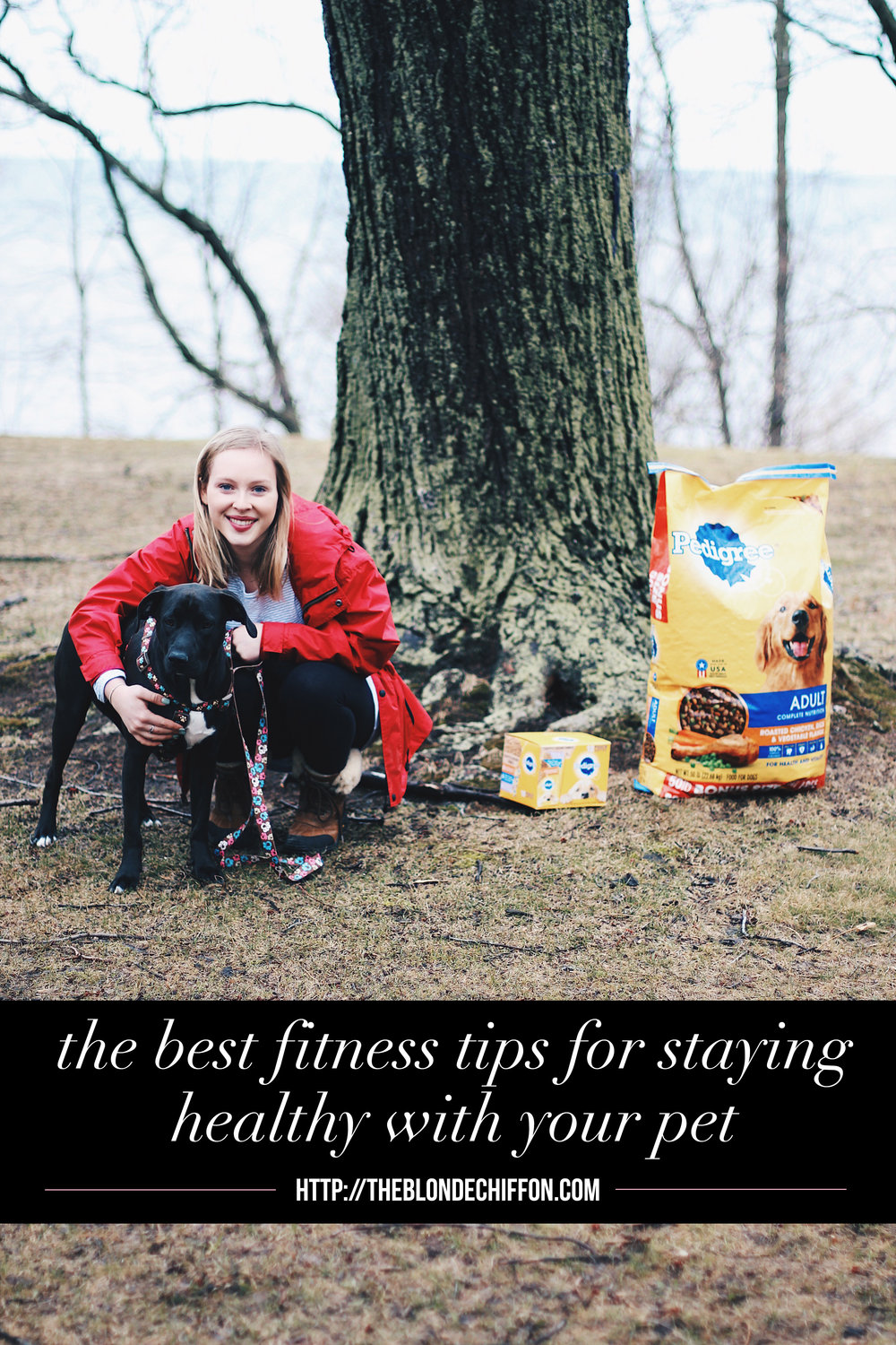 The Best Fitness Tips for Staying Healthy With Your Pet