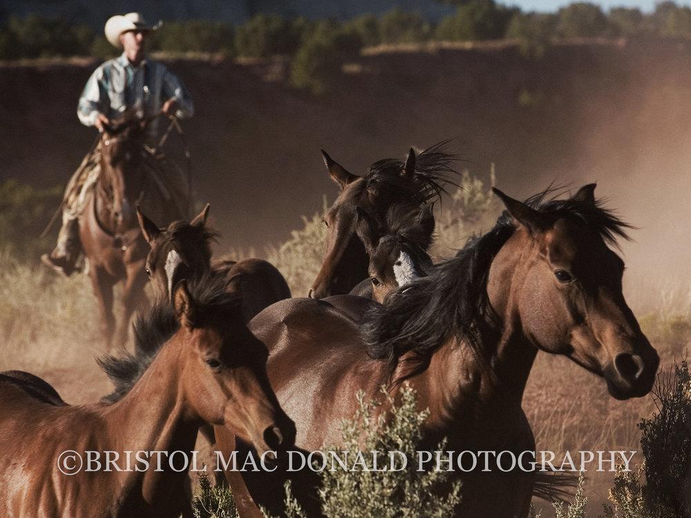 American Cowboy 4