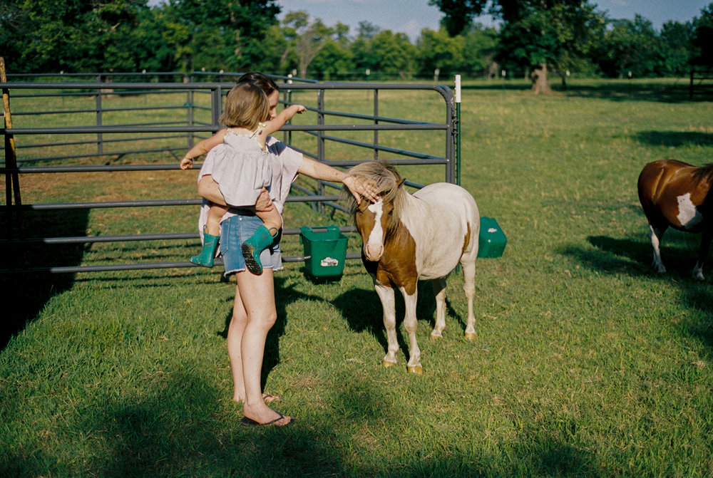 We co-own some cattle with my in-laws and are hoping to really grow the herd next year. I'm expecting my first horse ever later this fall, a beautiful Palomino. We're also getting our sheep in the spring of 2019. My sister-in-law and brother-in-law have kept their mini horses here and just had a baby mini horse that kind of broke the Internet,  see here.  My in-laws also have two mini donkeys who are my absolute favorite of the farm,  see here.