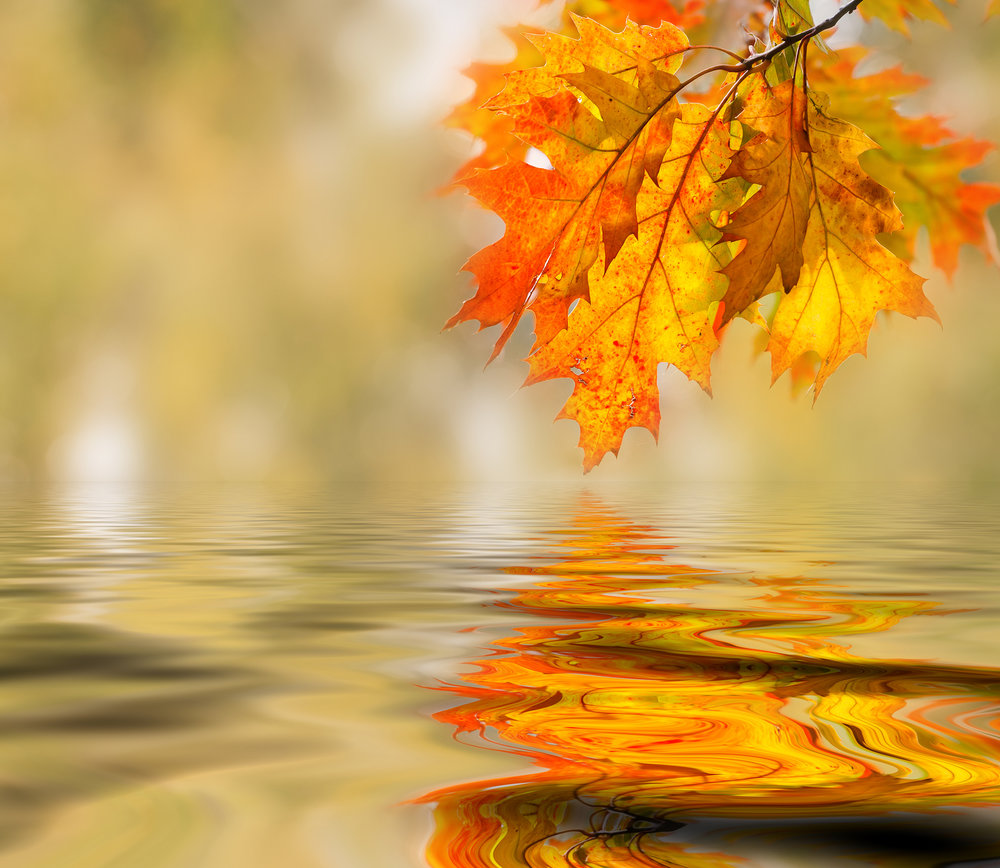 The metal element and Autumn