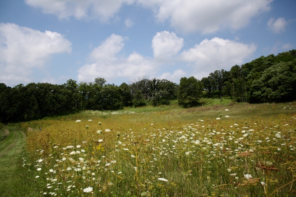 The open field and wildflowers