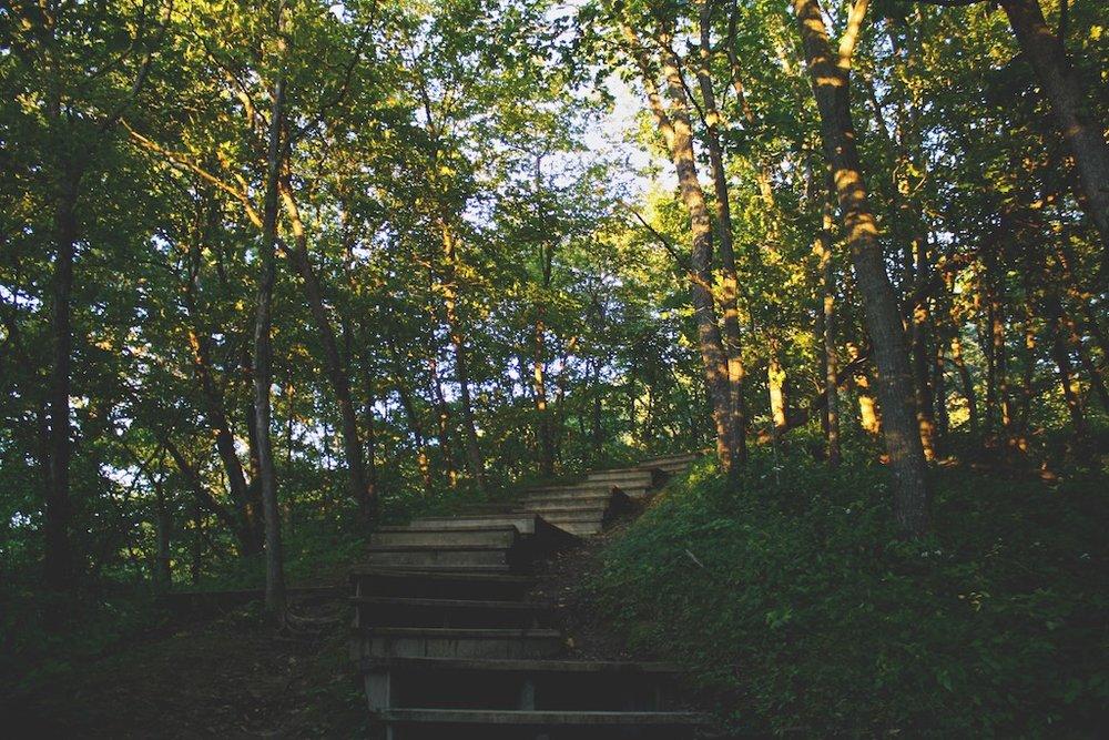 Brady's Bluff och Sagoskogen