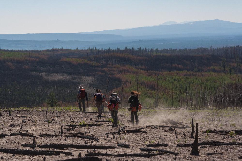 Fieldwork Yellowstone.jpg