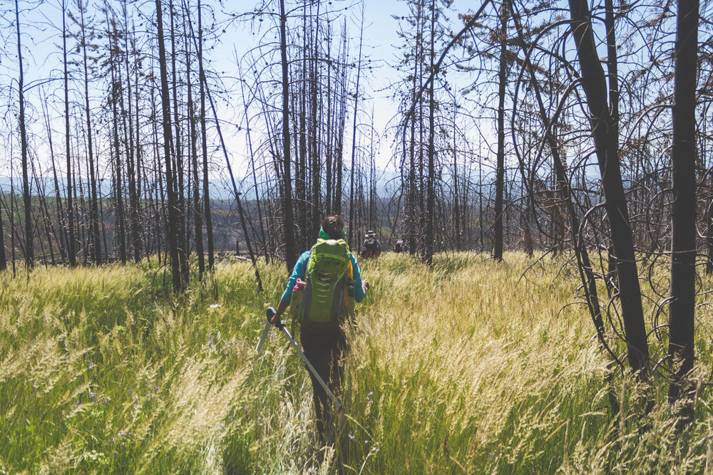 Walking through the burned forest: