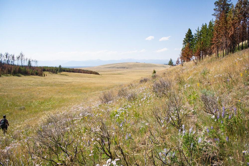 Utsikt från toppen av det brandhärjade området i Cougar Meadow